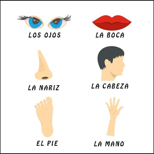 parti del corpo in spagnolo